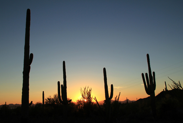 Discover 3 Gay Places in Tucson