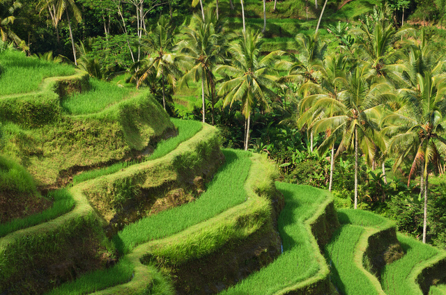 Discover 9 Gay Places in Ubud